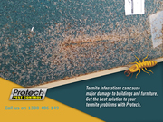 Get Rid of Termites – One of the Most Dangerous Insects that can Damag
