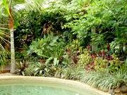 Commercial Gardeners Cairns