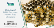 Looking For Effective Bees Removal Service in Melbourne?