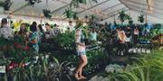 Melbourne - Huge Indoor Plant Sale - Tropicana Party