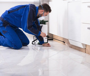 Looking for pest control services in Sandhurst?
