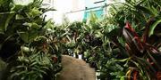Perth - Huge Indoor Plant Warehouse Sale - Plants   Pups Sale!