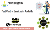 Local Pest Control Services in Bellara,  QLD